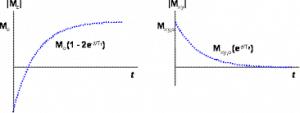 De opbouw van de longitudinale magnetisatie na een puls van 180° en afbraak van de transversale magnetisatie na een 90° puls.